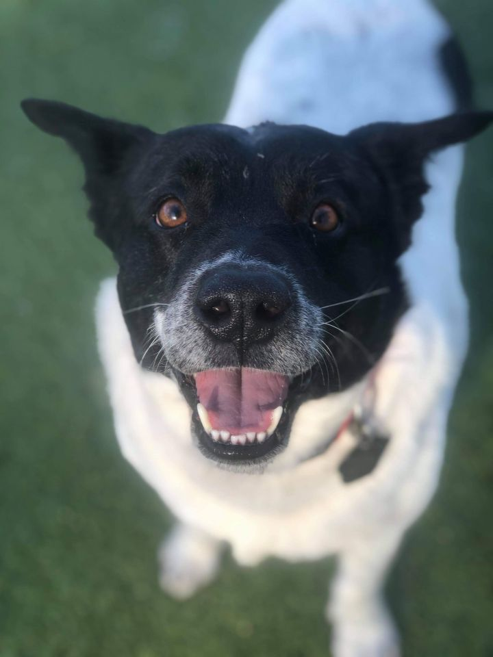 Geronimo, an adopted Collie Mix in Stamford, CT