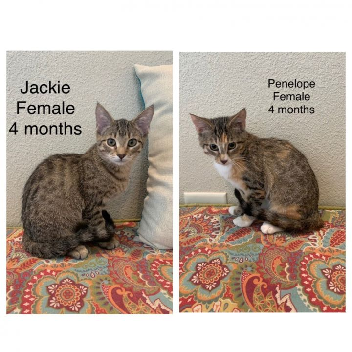 Jackie and Penelope 1