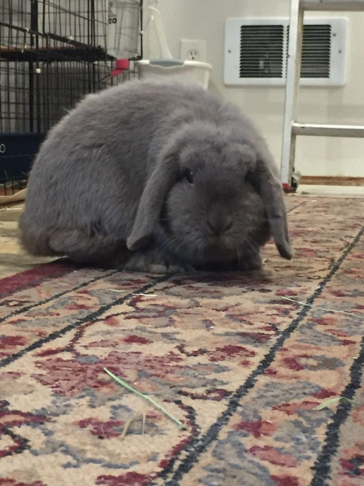 Mabel 2