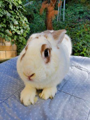 Thor Bunny Rabbit Rabbit