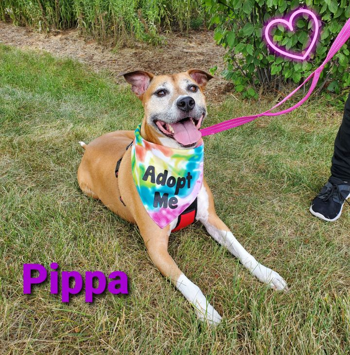 Pippa 2