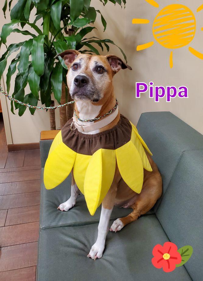 Pippa