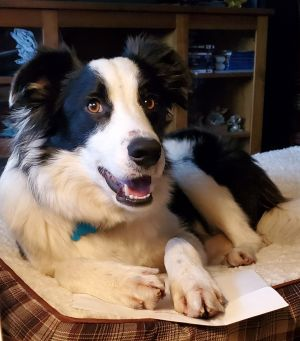 Roy - adopted!