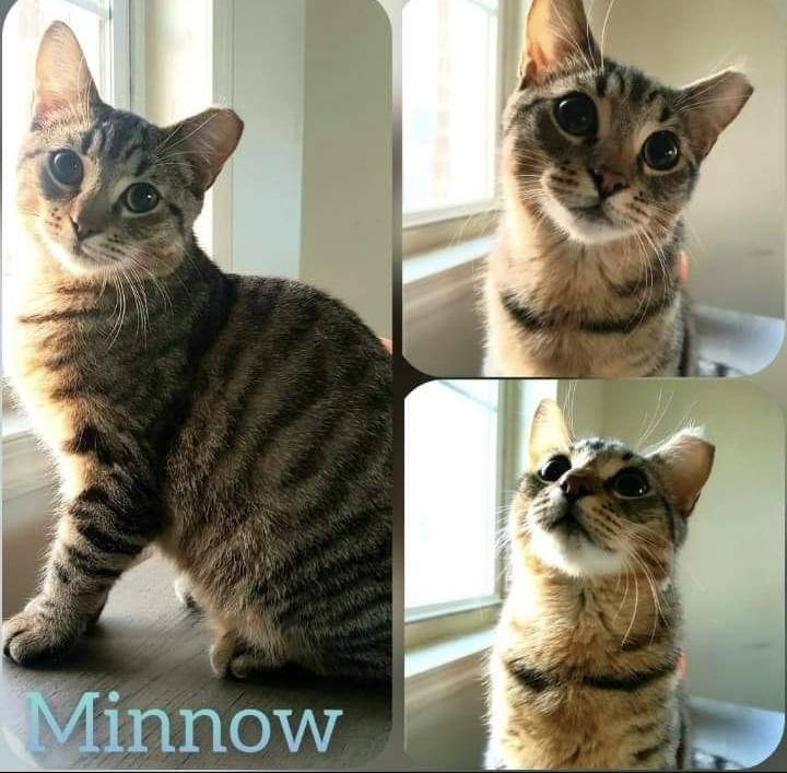 Mickey and Minnow 5