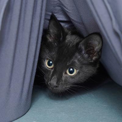 P kittens 2