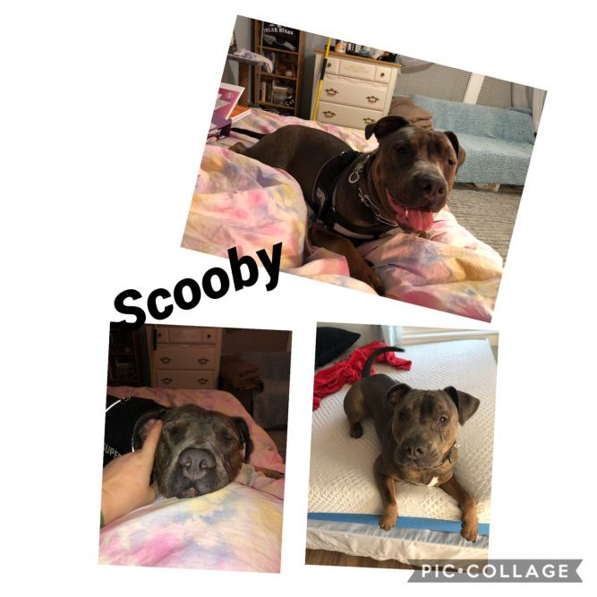 Scooby