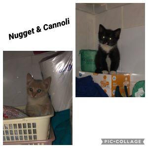 Nugget & Cannoli