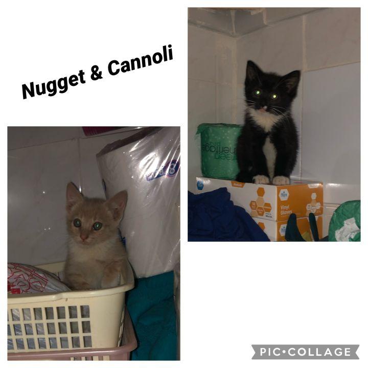 Nugget & Cannoli 1