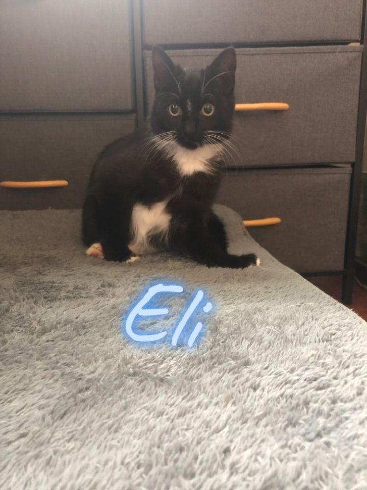 Eli 1