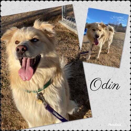 Odin detail page