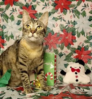 Say hello to Esme Esme is a sweet but sassy torbie She loves to sit in her bed by the