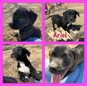The best little group of puppies Will be Available to go home 21421 Please email friendsofminear