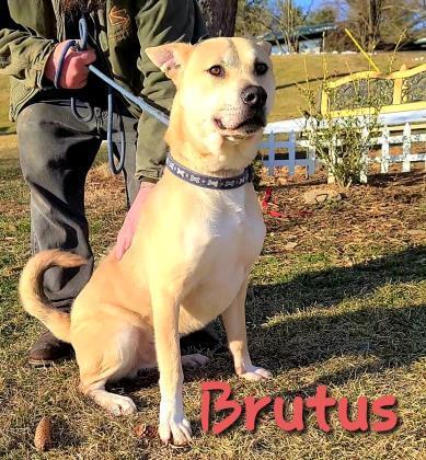Brutus 2