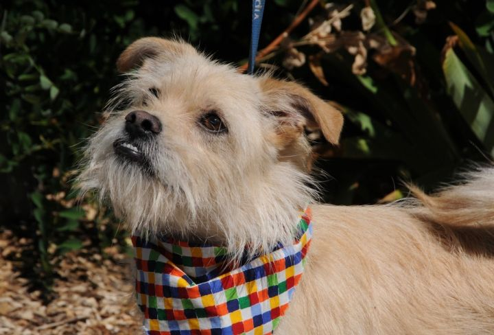 Tanner, an adoptable Terrier Mix in Jamestown, CA_image-1
