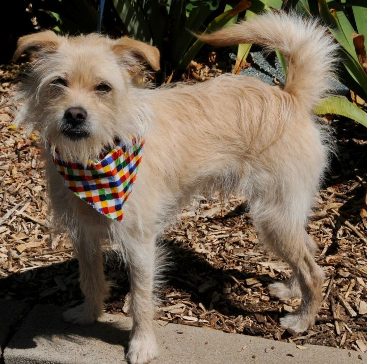 Tanner, an adoptable Terrier Mix in Jamestown, CA_image-2