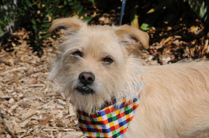 Tanner, an adoptable Terrier Mix in Jamestown, CA_image-3