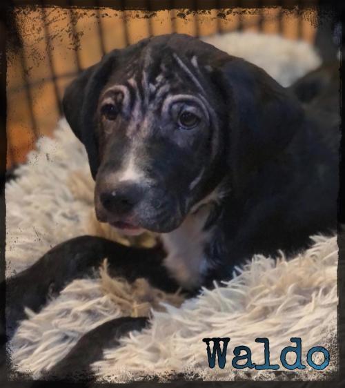 Waldo (GA) 1
