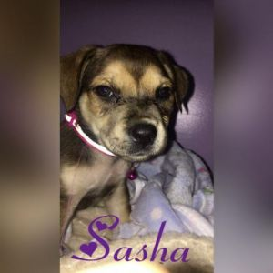 You can fill out an adoption application online on our official websiteSasha SC is a female Black