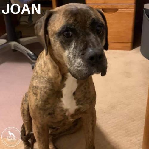 Joan 1