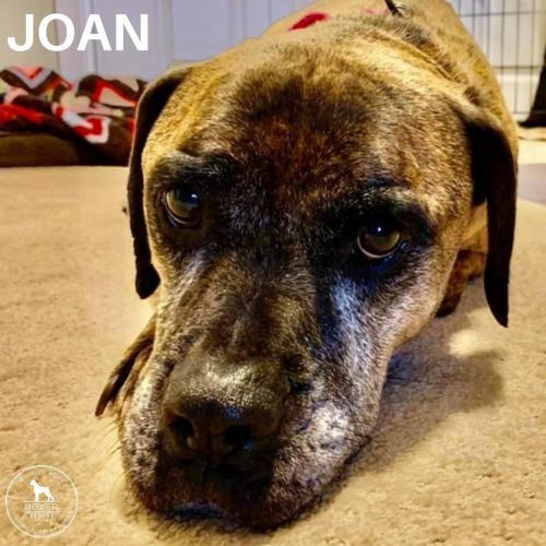 Joan 3