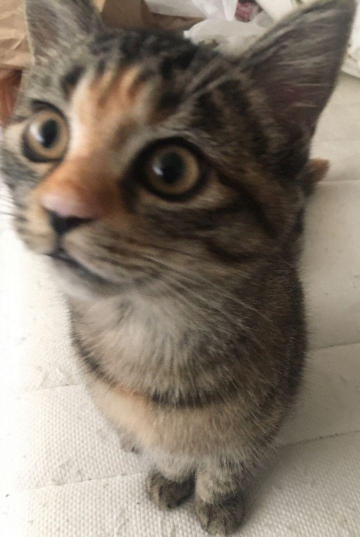Chloe 1