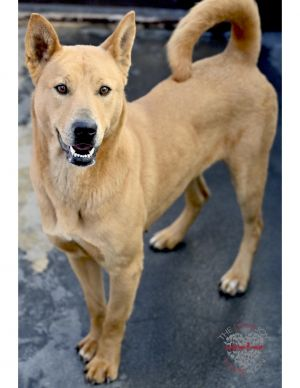 Allie Duo is a 3 year old Shepard Mix She came with another dog named AJ who got adopted She