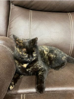 Hi Im Mystic I am an approximately 5 year-old spayed female GORGEOUS tortoiseshell I am up-to-da