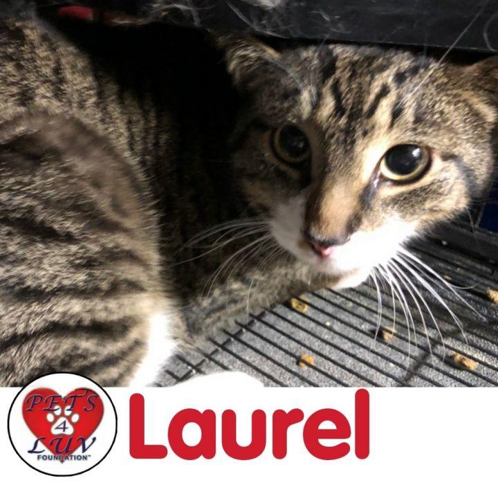 Laurel 2