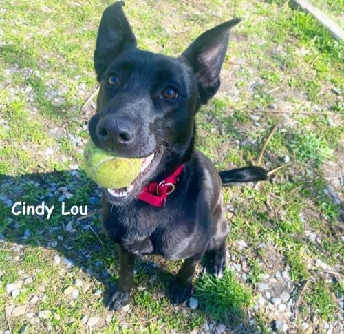 Cindy-Lou-pending