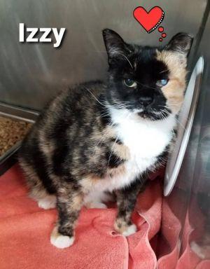 Izzy- FIV Positive