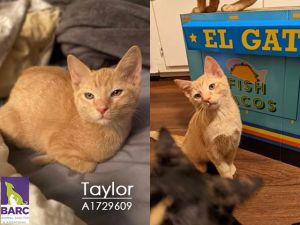 Taylor is enjoying some time in Foster Care If you are interested in meeting th