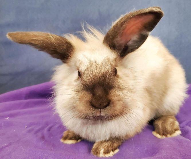 Jessica Rabbit (bonded w/ Roger Rabbit)
