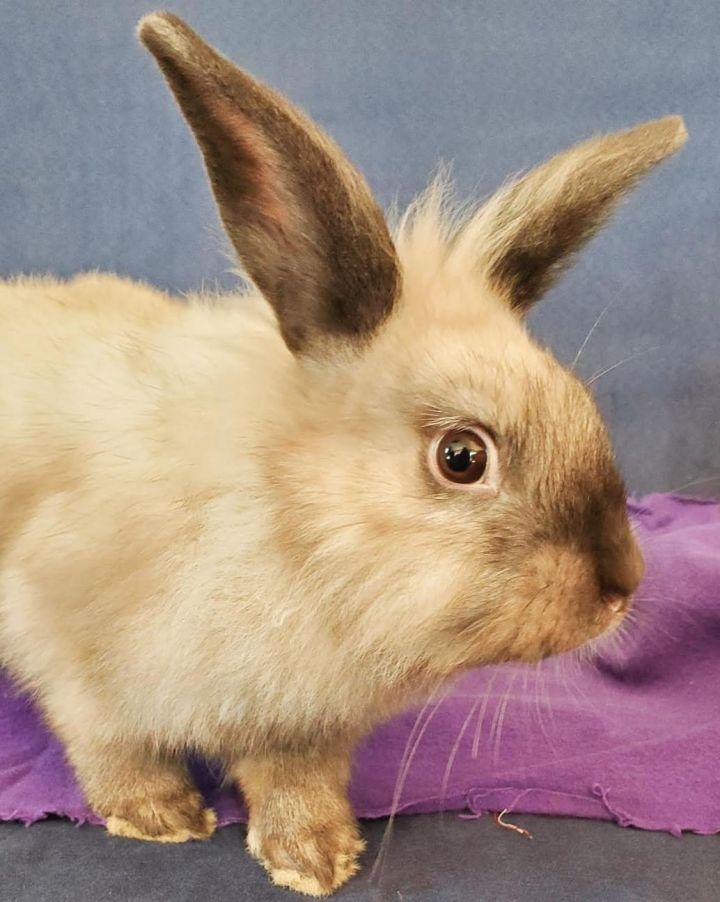 Jessica Rabbit (bonded w/ Roger Rabbit) 2
