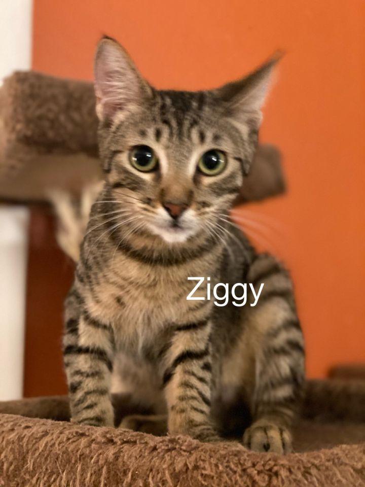 Ziggy 1