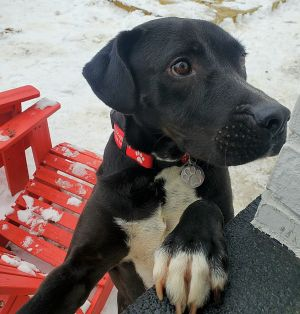 TO APPLY GO TO wwwLuckyDogRefugecom Say hello to Samson one of our newest arrivals from Mississ
