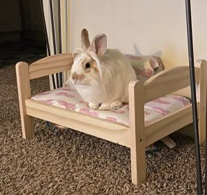 See below for this rabbits description To apply for this rabbit go to wwwlarabbitsorg and fill