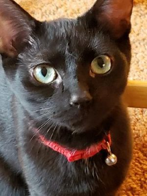 Coriander is available for adoption He was rescued from a local colony in North