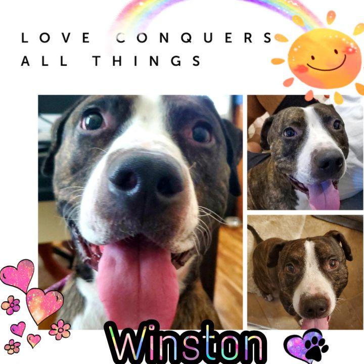 Winston 6