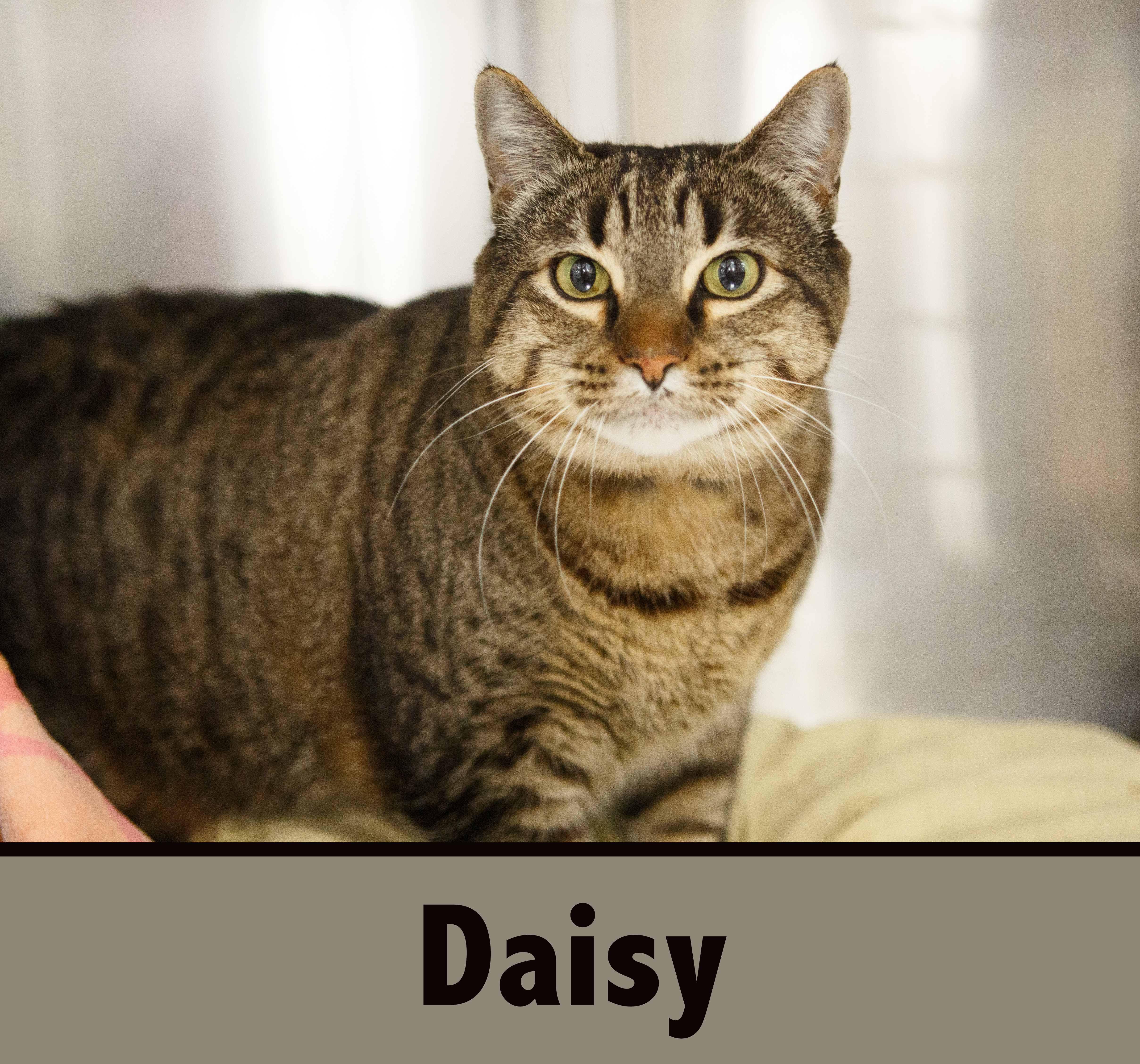 Daisy detail page