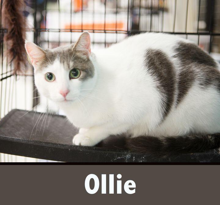 OLLIE 2