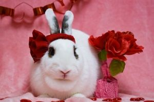 ELISE IS A DARLING SPAYED AND VACCINATED FEMALE RABBIT ELISE WAS ABANDONED OUTSIDE WITH SEVERAL OTH
