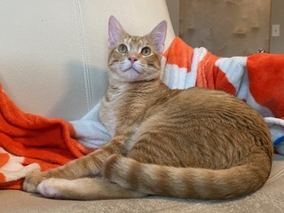 Frankie - Not Currently Accepting New Applications (Waitlist Only) 3