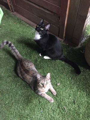 Savannah and Buffy are semi-feral cats who are looking for an indoor-only warehouse or shop cat situ