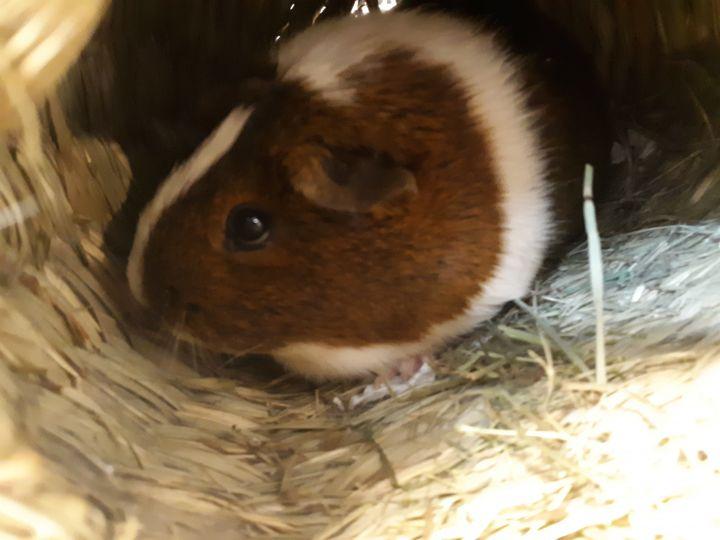 Maisey 3