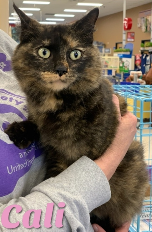 Cali, an adoptable Tortoiseshell Mix in Cantonment, FL