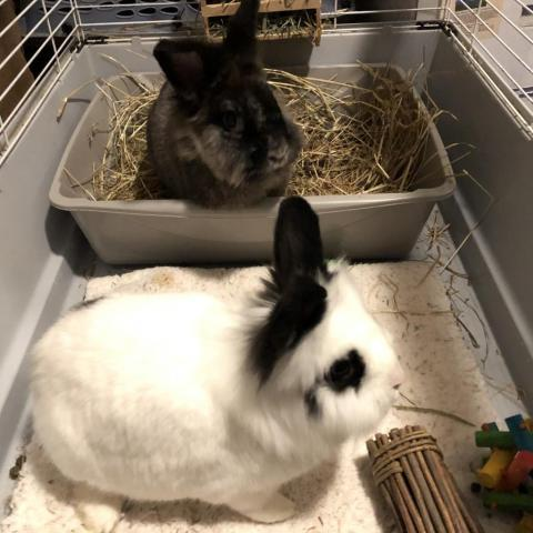Ollie & Hurley 2