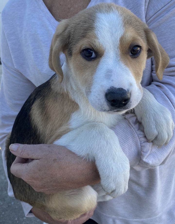 John Denver Pups 2021-064-068 2