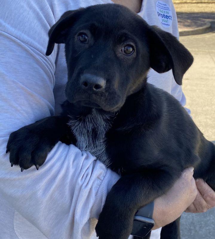 John Denver Pups 2021-064-068 3