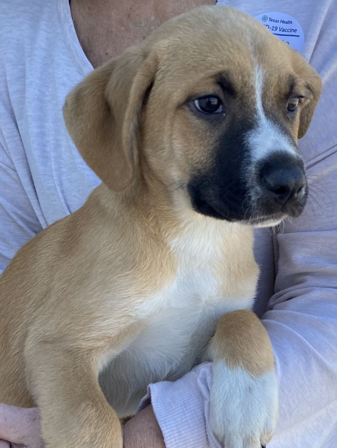 John Denver Pups 2021-064-068