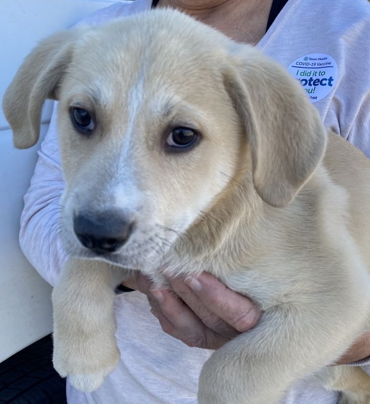 John Denver Pups 2021-064-068 4